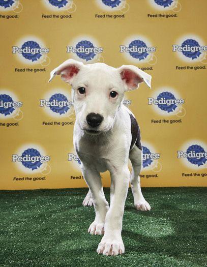 Puppy Bowl 2018 Checker