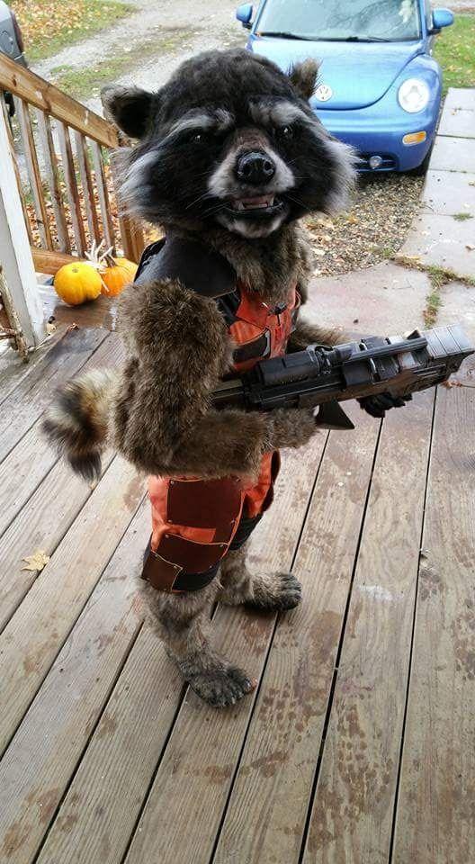 Guardians Rocket Costume