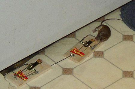 Mice? Boo!