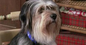Gilmore Girls Is Bringing Back Lorelai's Dog Paul Anka