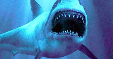 Deep Blue Sea 2 Trailer Is Here Bringing Shark Horror Back