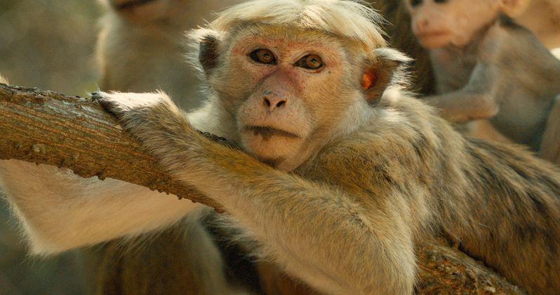 Disney's Monkey Kingdom Trailer