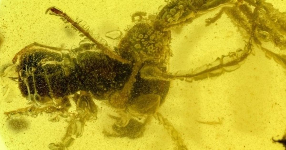Prehistoric Hell Ant Trapped in Amber Is Stuck Eating Its Prey 99 Million Years Later - MovieWeb