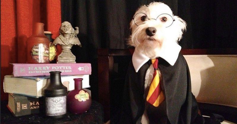 Animal Shelter Sorts Dogs Into Harry Potter Hogwarts Houses