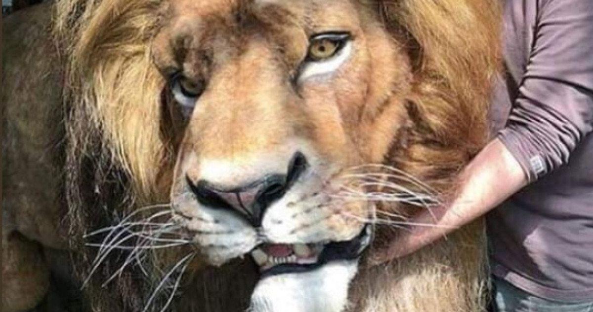 mufasa revealed in disney u0026 39 s lion king live