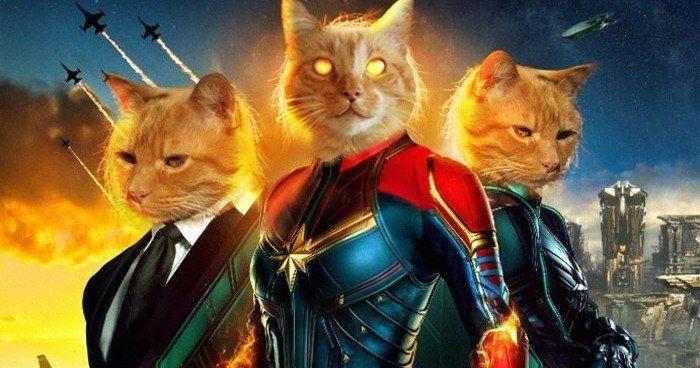 https://cdn3.movieweb.com/i/article/BPoGNAVtofxC6TzJj48Rs1CzznEDGz/798:50/Captain-Marvel-Goose-The-Cat-Live-Stream.jpg