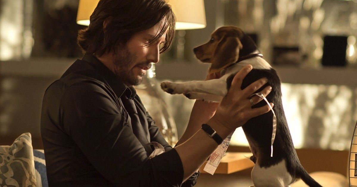 John Wick 3 Hund