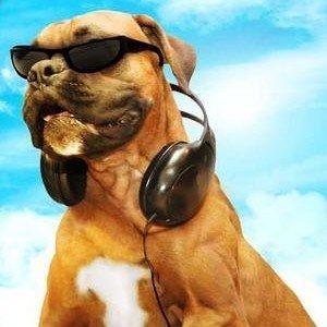 Doggie B Trailer!