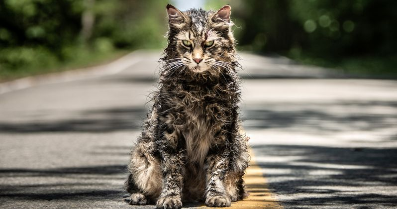 Pet Sematary Remake's Church the Cat Has Died