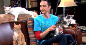 Big Bang Theory Sued Over Soft Kitty Song