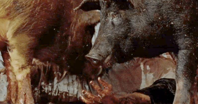 Man-Eating Pigs Attack in New Walking Dead Season 7 Trailer