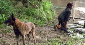 Walking Dead Fans Petition to Keep Daryl's Dog Alive