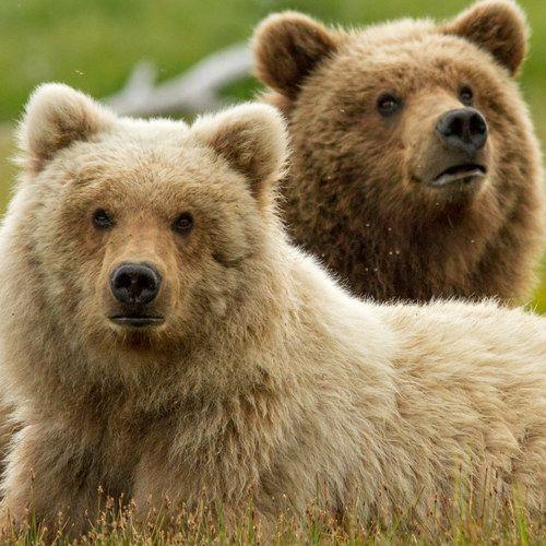 Bears First Look Featurette