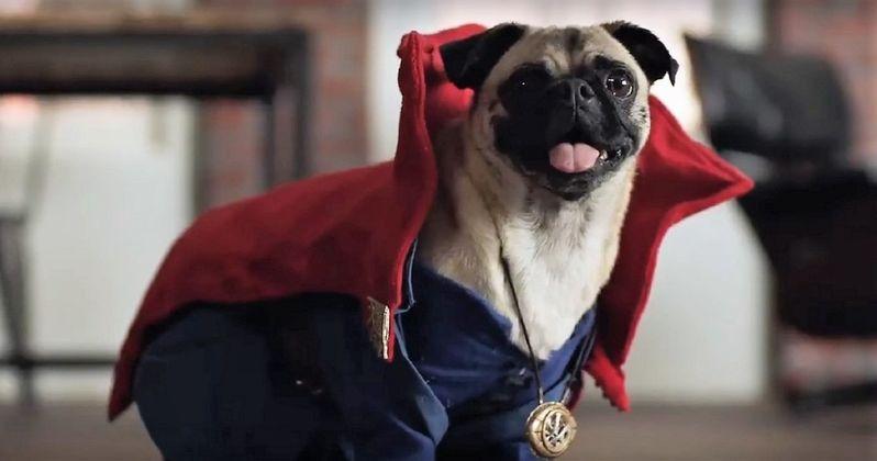 Dogtor Strange: Superhero Dogs & Benedict Cumberbatch Tease Home Video Release