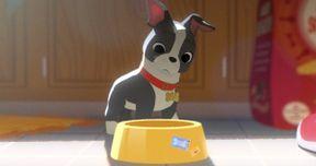 Disney's Feast Photos: Meet Winston the Dog