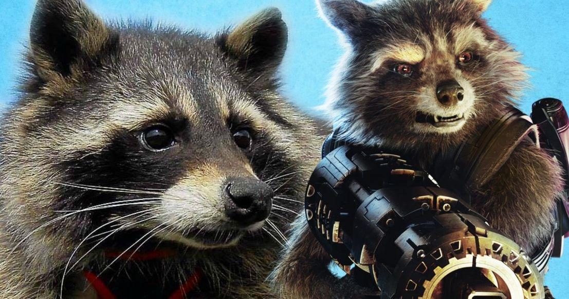 Oreo-Raccoon-Dies-Guardians-Of-The-Galax