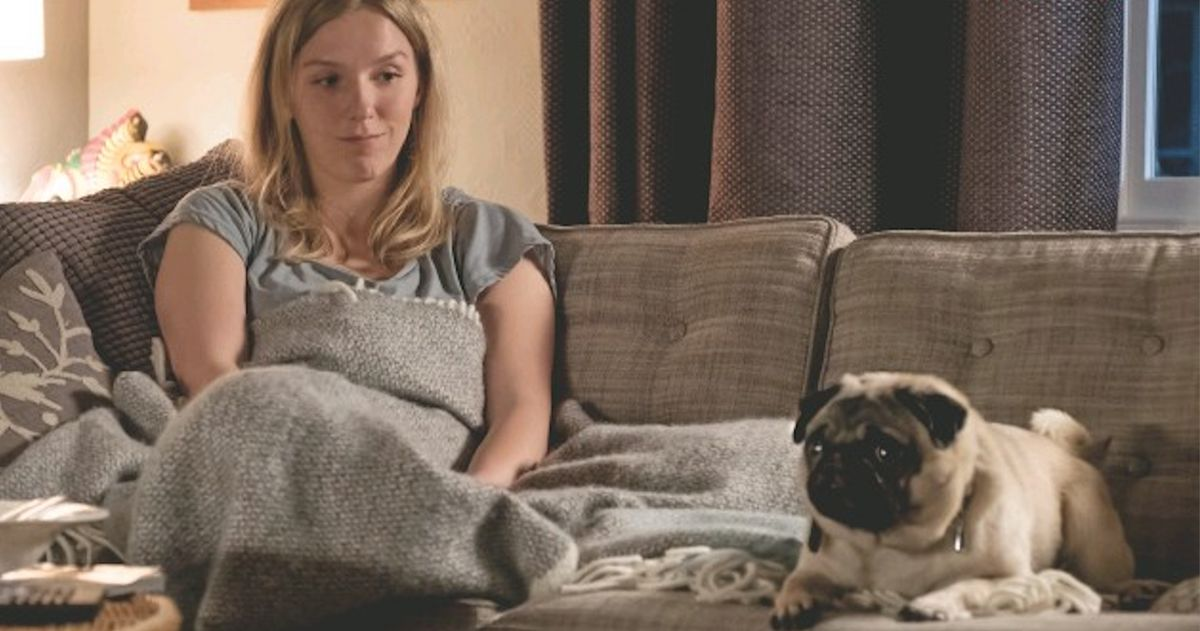 Новое исследование утверждает, что больше людей будут смотреть телевизор со своей собакой, чем семья