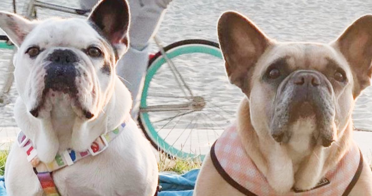Собаки Леди Гаги благополучно возвращены, выгул собак полностью выздоровел, стрелки все еще на свободе