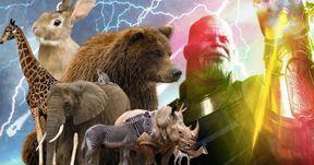Thanos' Infinity War Snap Also Killed Animals