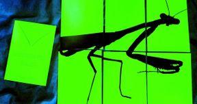 Edgar Wright Will Direct Grasshopper Jungle