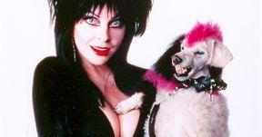 Cassandra Peterson Teases Elvira: Mistress of the Dark Sequel, Possible Netflix Series