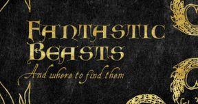 Fantastic Beasts Script Finished; David Yates Will Direct