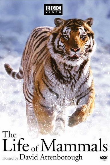 BBC Life of Mammals - Däggdjurens liv (2002)