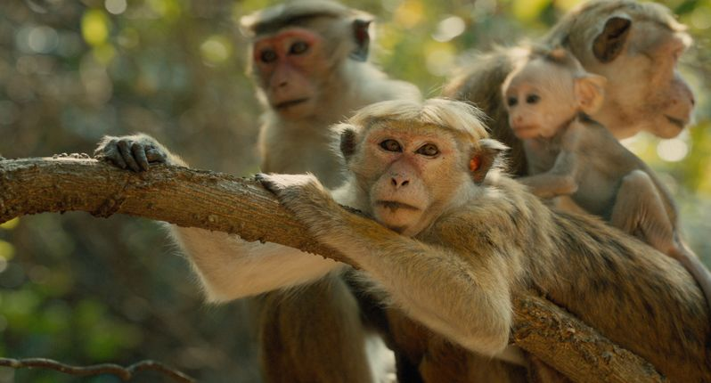 <strong><em>Monkey Kingdom</em></strong> Photo #1