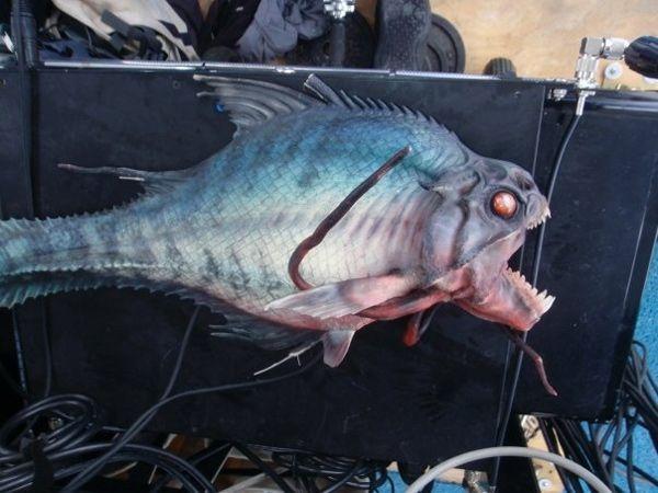 One of the Piranhas from <strong><em>Piranha 3D</em></strong>