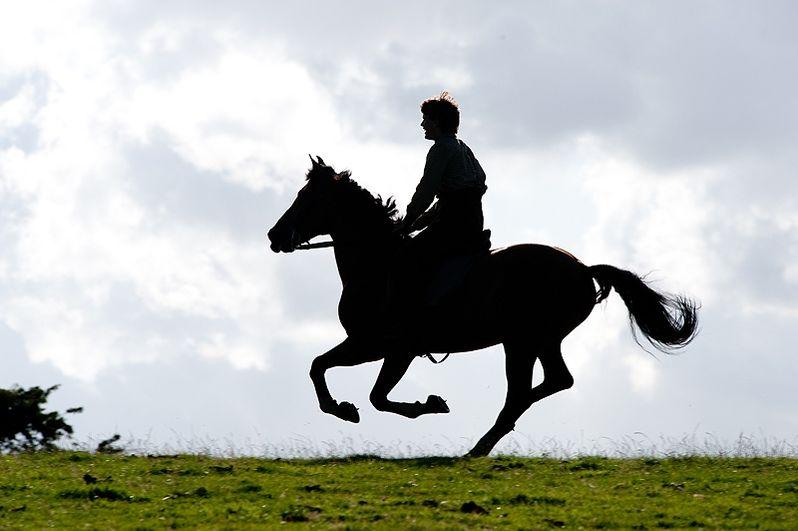 <strong><em>War Horse</em></strong> photo 5