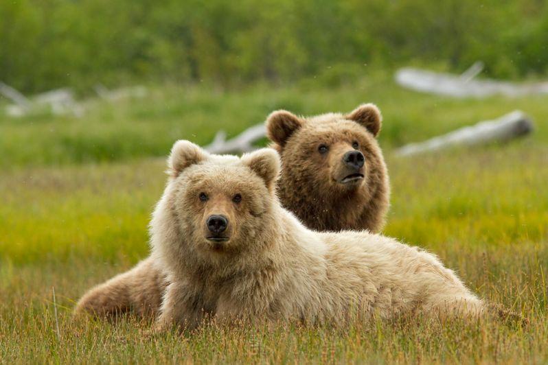 <strong><em>Bears</em></strong> Photo 1
