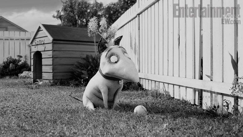 <strong><em>Frankenweenie</em></strong> Photo #3