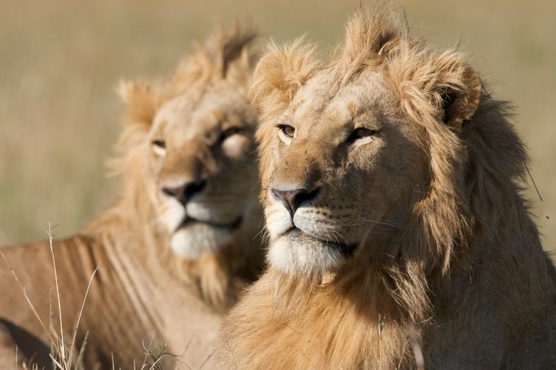 Keith Scholey Talks <strong><em>African Cats</em></strong>