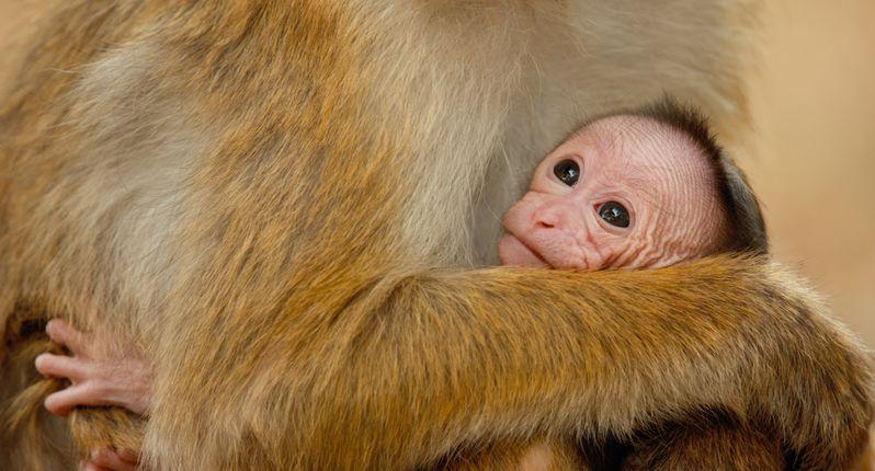 <strong><em>Monkey Kingdom</em></strong> Photo #2
